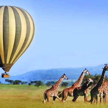 Golfurlaub Kenia + Wildsafari Package