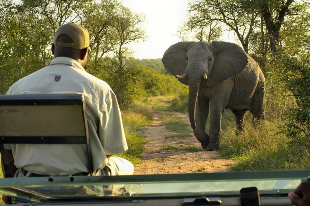 Südafrika Wild & Golf Urlaub rund um Kapstadt
