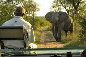 Südafrika Wein & Wild & Golf Safari